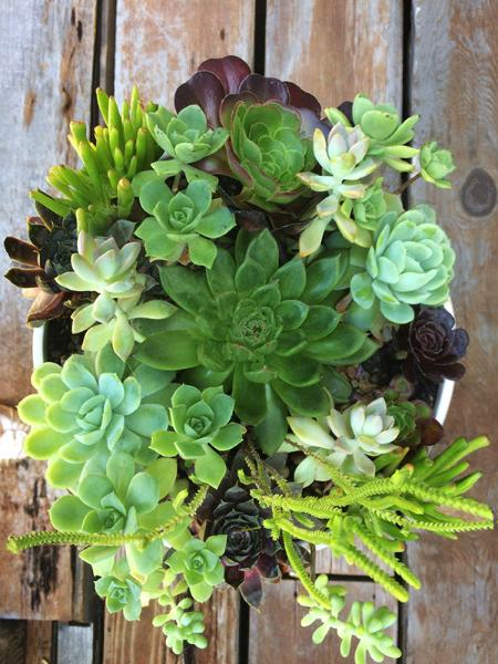 Succulents mixed in oval ceramic vase