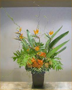 five footer of birds of paradise and cymbidium with curly willow