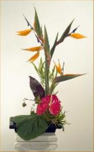 Birds of paradise,  anthurium ikebana