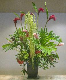 Green amaranthus cascades seven feet -ginger in red pink