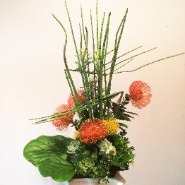 ikebana: pincushions, succulents, horsetails, orange, green
