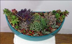 succulents arranged in half-round holder