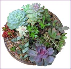 succulents arranged in round glass holder
