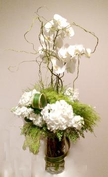 Green & White Phalaenopsis & Hydrangea - Check Availability
